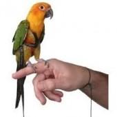 Шлейка для выгула попугая, шлейка Авиатор для выгула попугаев размер L, есть разные размеры