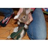 Костюм для выгула кроликов, прогулочные костюмы для декоративных кроликов