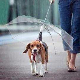 Зонтик для собак, зонты для собак и кошек, зонт для собачки